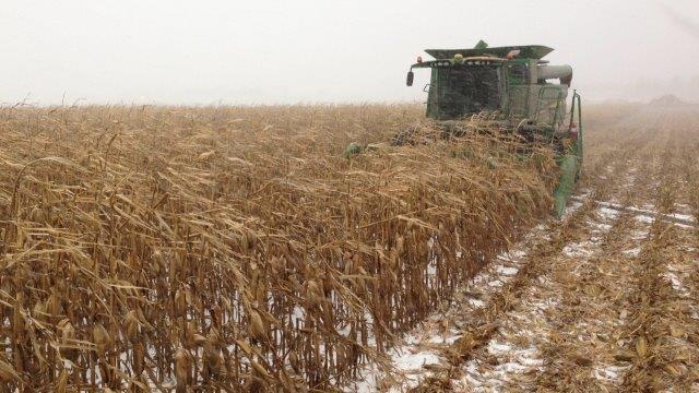 snowy 2014 harvest
